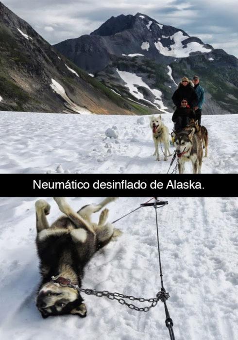 Snapchat perros - alaska desinflado