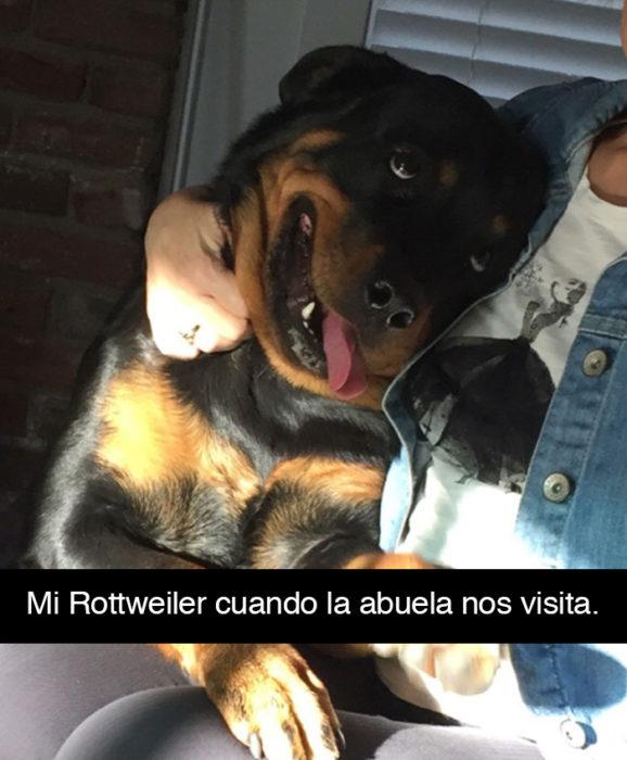 Snapchat perros - perro ojos amor abuela