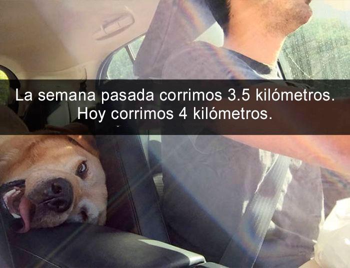 Snapchat perros - 4 kilómetros