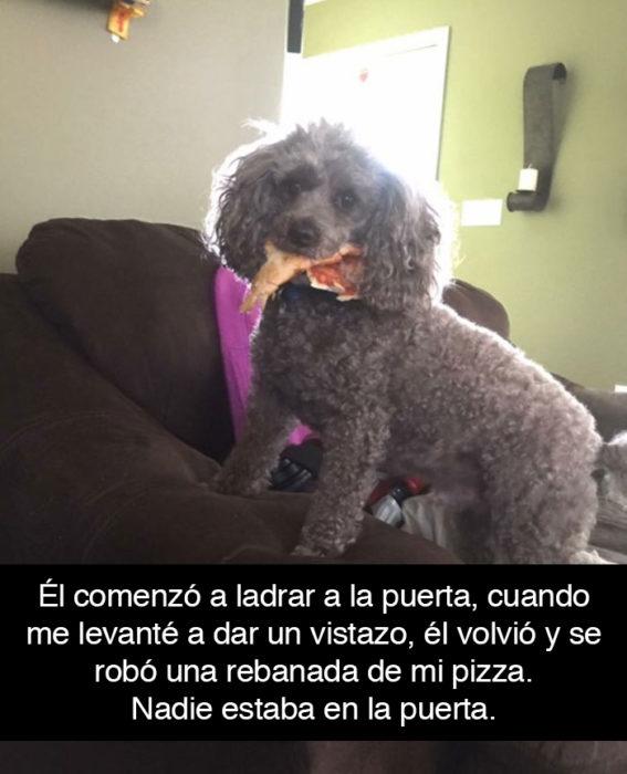 Snapchat perros - perro se roba pizza
