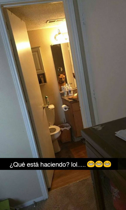Snapchat perros - perro viéndose en el espejo