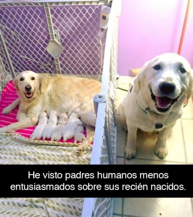 Snapchat perros - labradores felices con cachorros