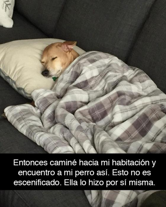 Snapchat perros - perro dormido tapado