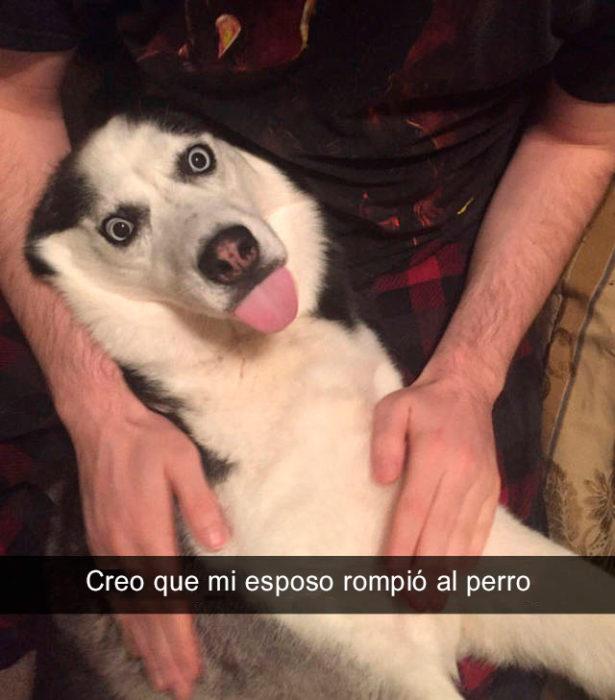 Snapchat perros - se rompió el perro