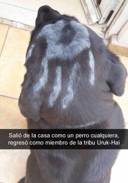 Snapchat perros - perro miembro tribu