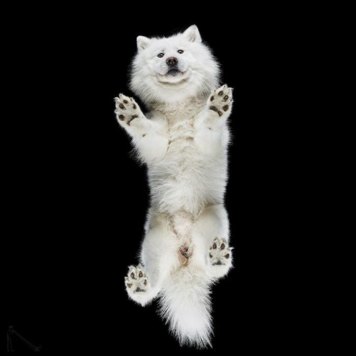 perro blanco visto de abajo