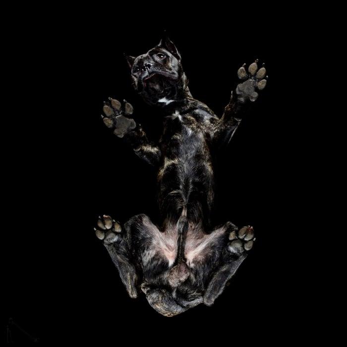 perro negro visto de abajo