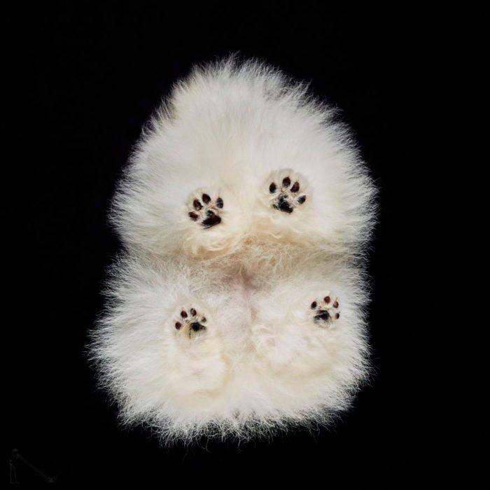 huellas perro vistas de abajo