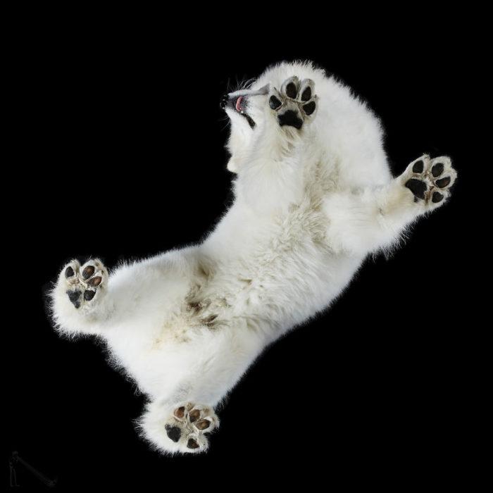 perro blanco esponjoso visto de abajo