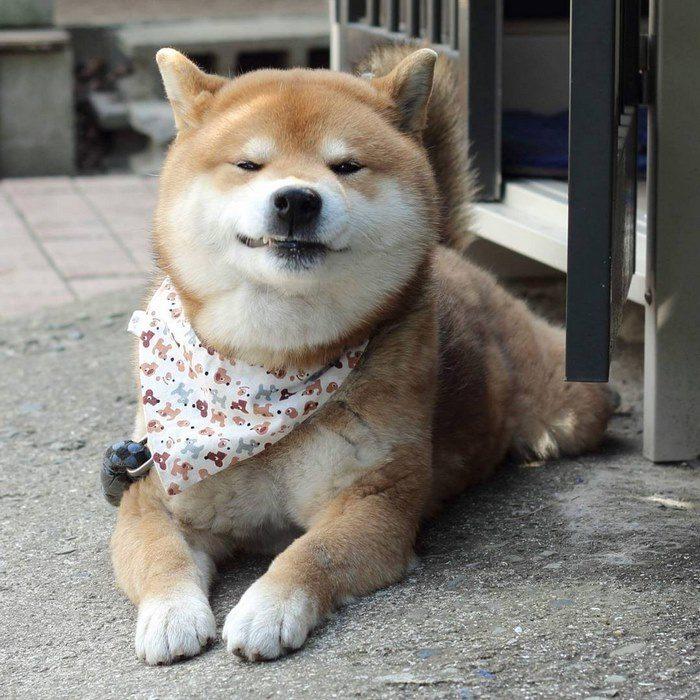 Ryuji 7