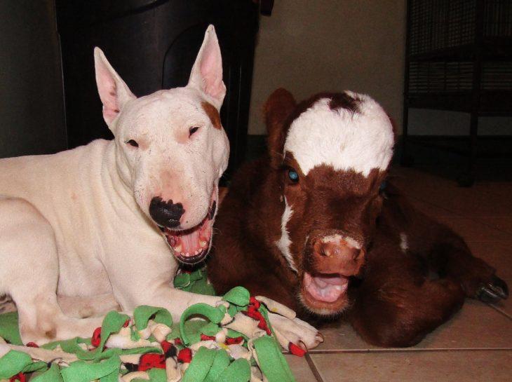 vaca y perro sonriendo