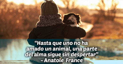 Cover Las 13 mejores frases sobre animales