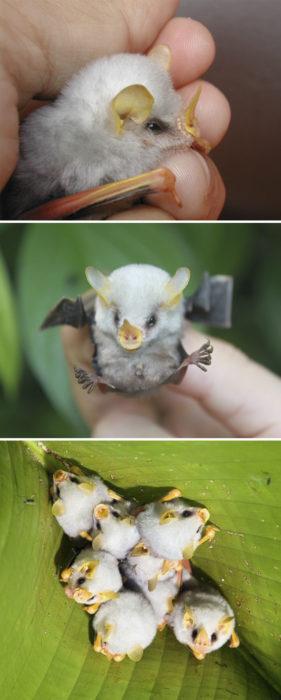 animales raros 11