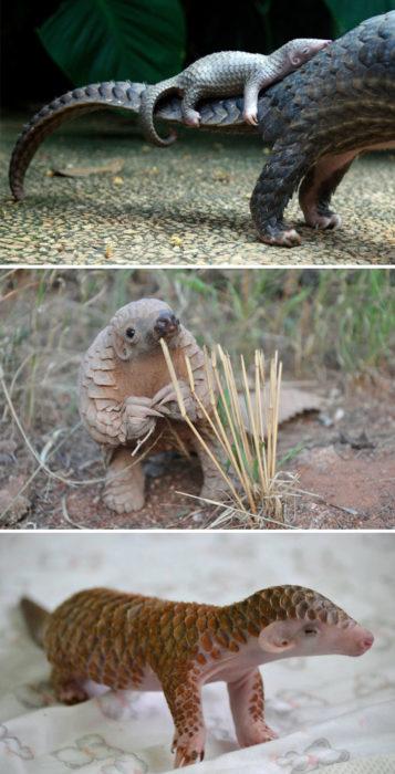animales raros 9