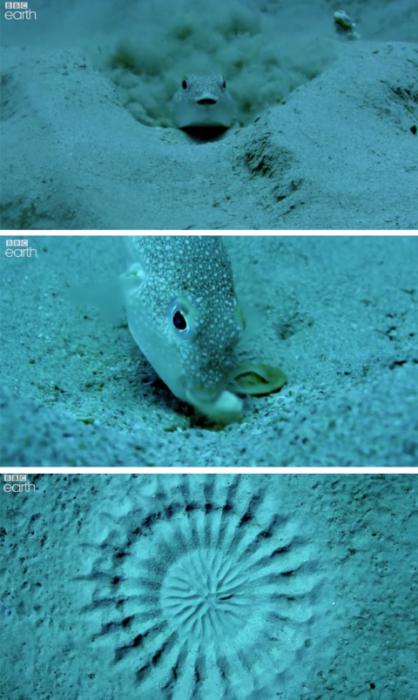 pez globo fondo del mar