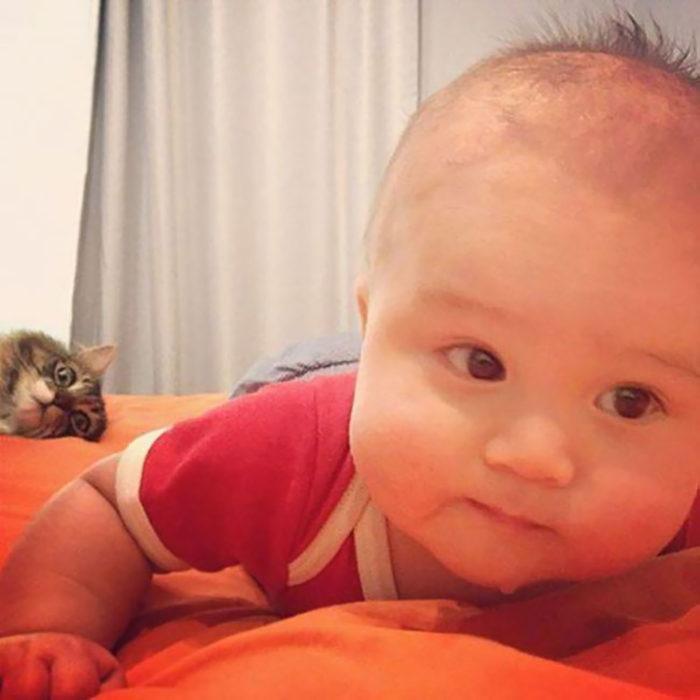 foto de bebé y detrás se ve un gato