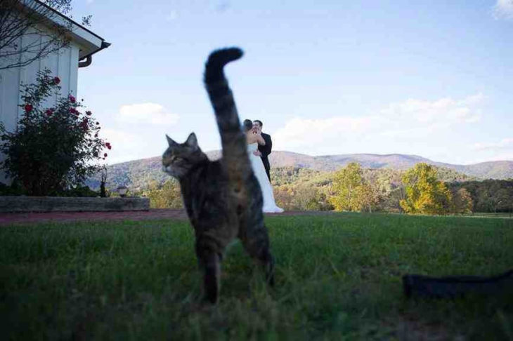 gato se entromete en foto de boda