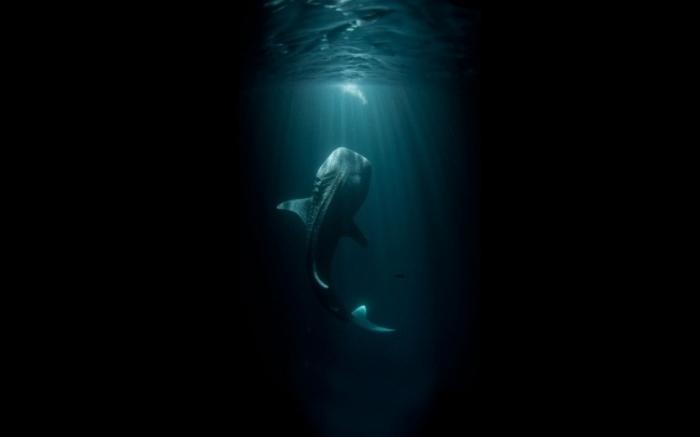 aventuras-acuaticas-10