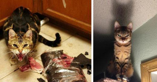 Cover tiernos gatitos que parecen salidos del Infierno