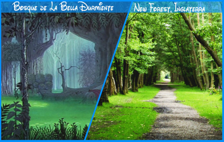 bosque de la bella durmiente real y de disney