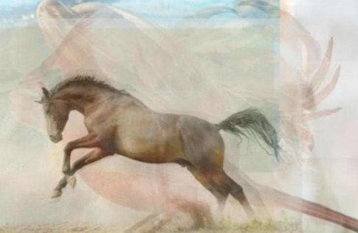 dibujo caballo personalidad