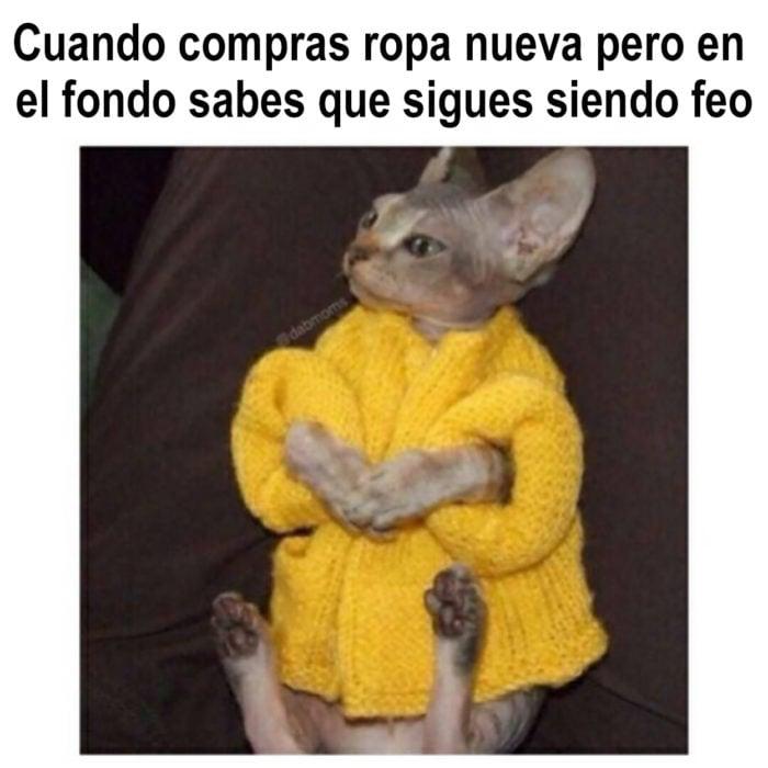 meme gato con abrigo amarillo