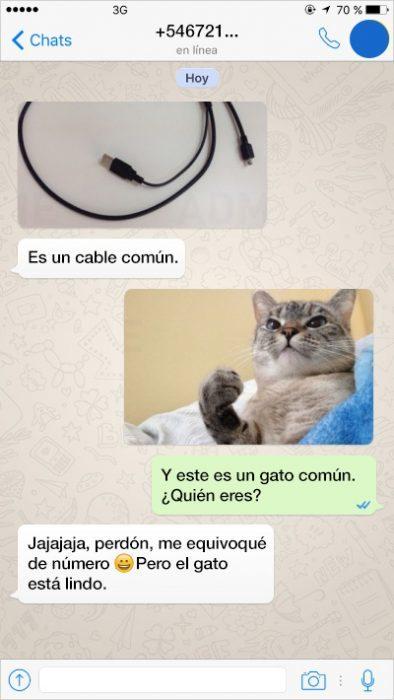 cable gato conversación whats app