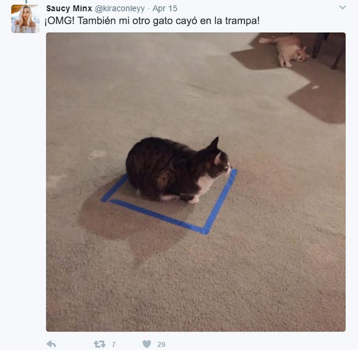 cosas gatos 10