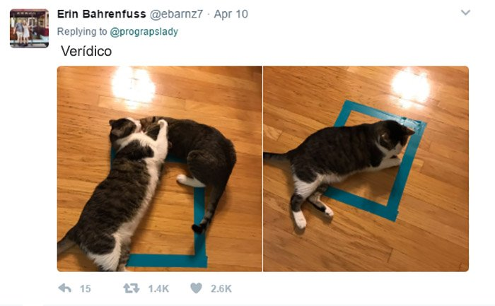 cosas gatos 4