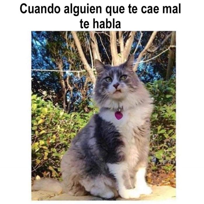 meme de gato cuando alguien habla contigo