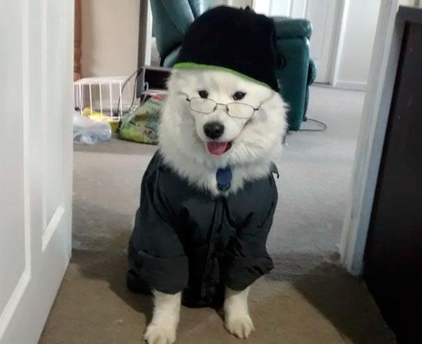 perro husky blanco ropa verde