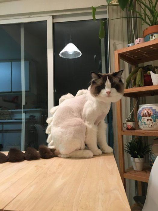 gato corte de cabello