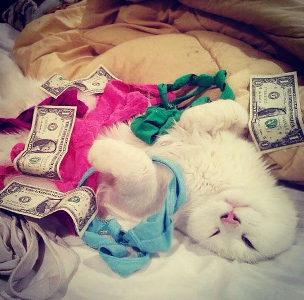 gato billetes tangas