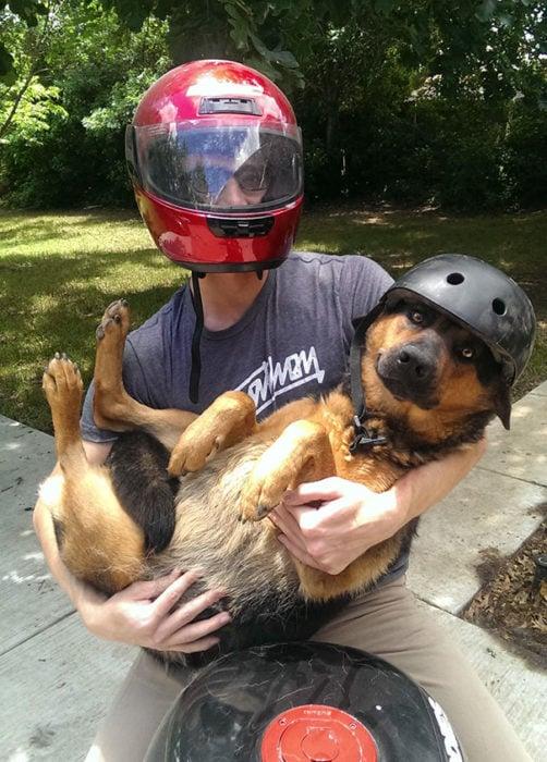 perro motocicleta paseo
