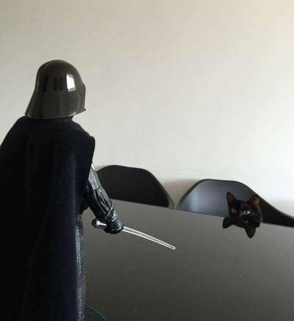 star wars gato negro