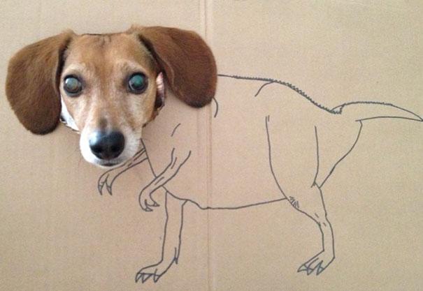 perro cartón