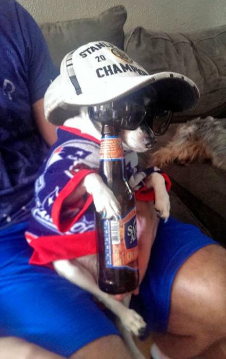 perro bebiendo cerveza disfraz