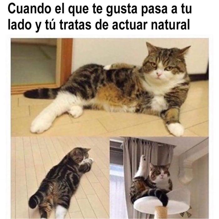 meme de gato actúa natural