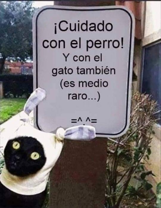 gato frente a cartel que dice cuidado con el gato