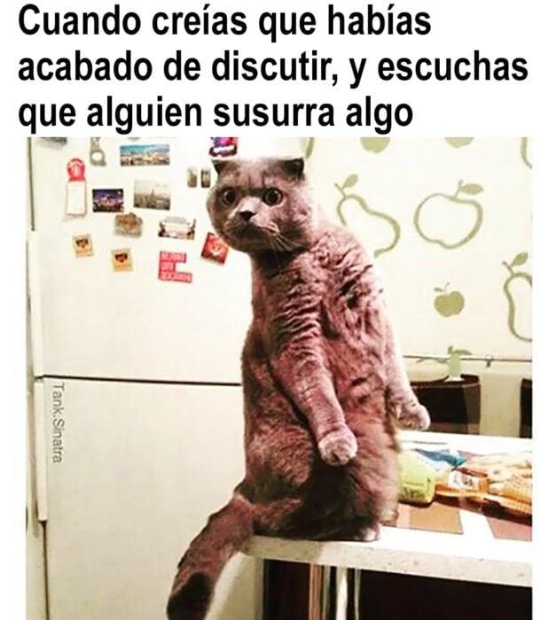 meme de gato sobre discutir