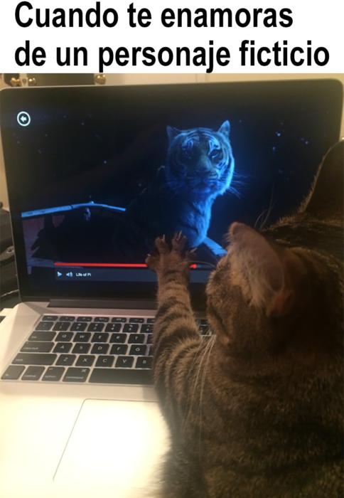 gato mirando a un tigre en la computadora
