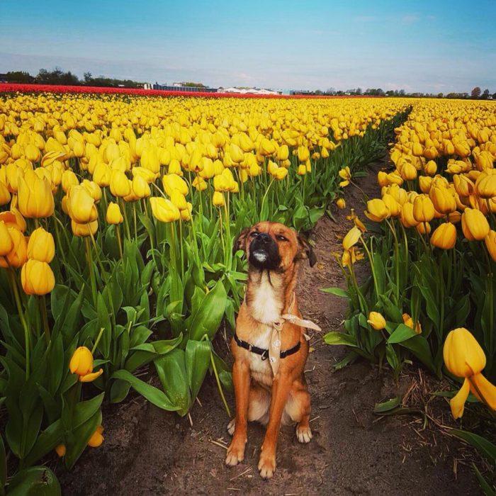 perro en un campo de flores amarillas
