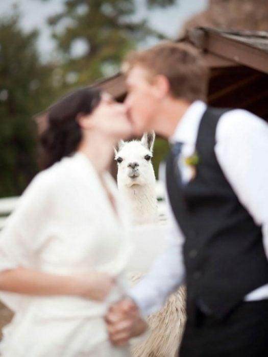 ¿Quien dijo que solo los humanos podían ir a las bodas?
