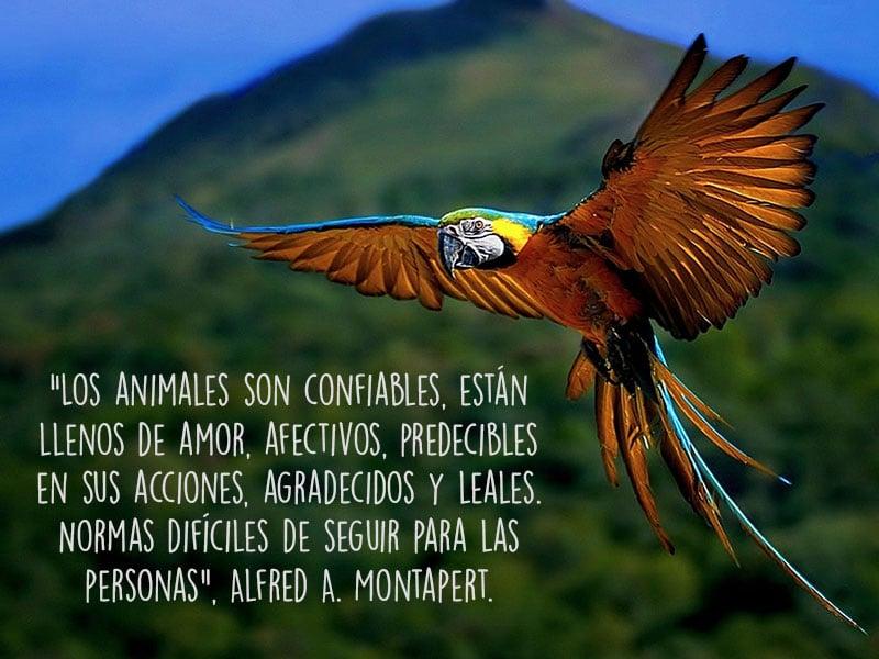 Frases De Amor Con Imagenes De Naturaleza: 13 Frases Sobre Lo Importante Que Es Amar A Los Animales