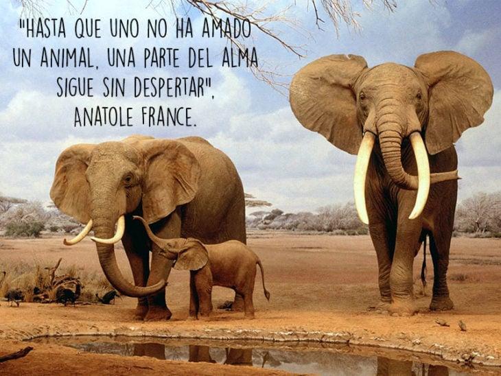 elefantes animales fotografía frase Natgeo