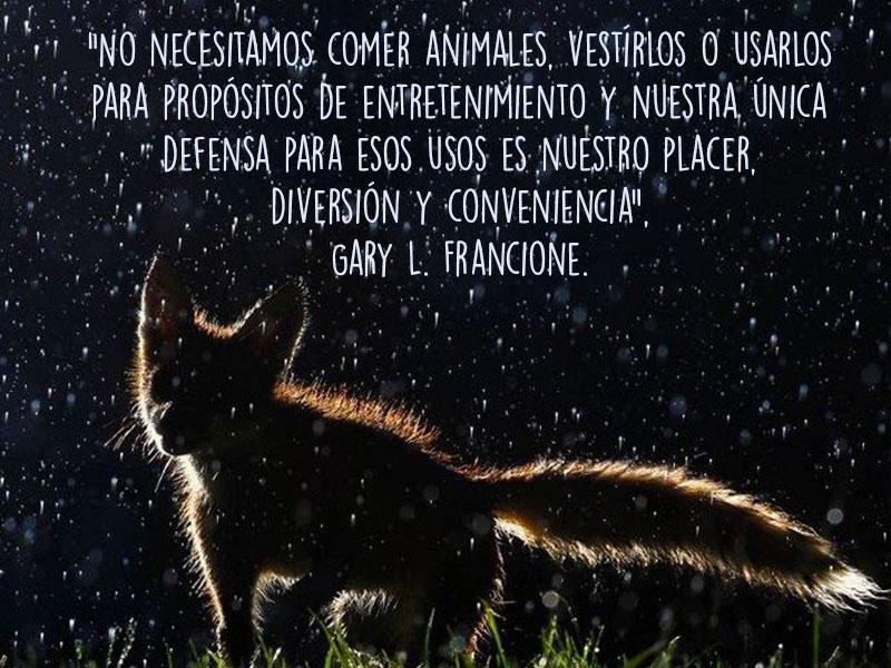 13 Frases Sobre Lo Importante Que Es Amar A Los Animales