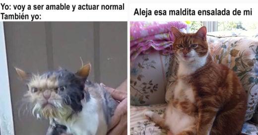 Cover memes de gatos que te harán el día