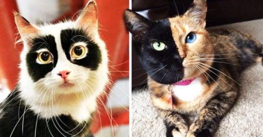 Cover gatos con marcas de nacimiento ÚNICAS