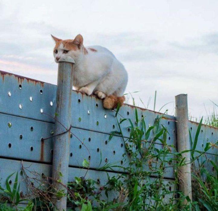 ilusión óptica de un gato tragando un tubo
