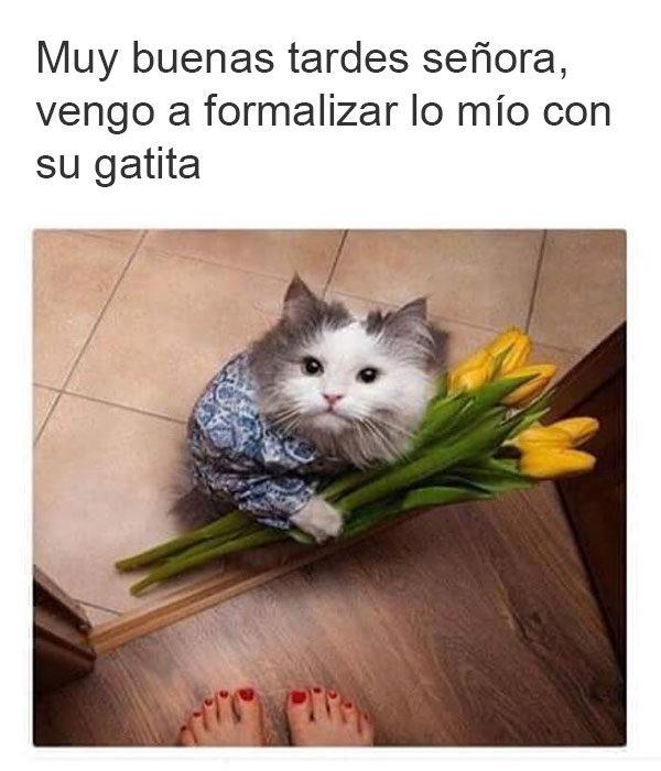 gato flores dueña traje